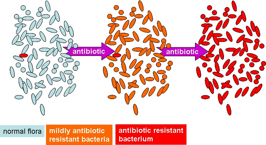 research paper on antibiotic resistance